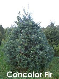 Matt' Christmas Tree Farm - 309 Weeks Ave, Manorville NY ...